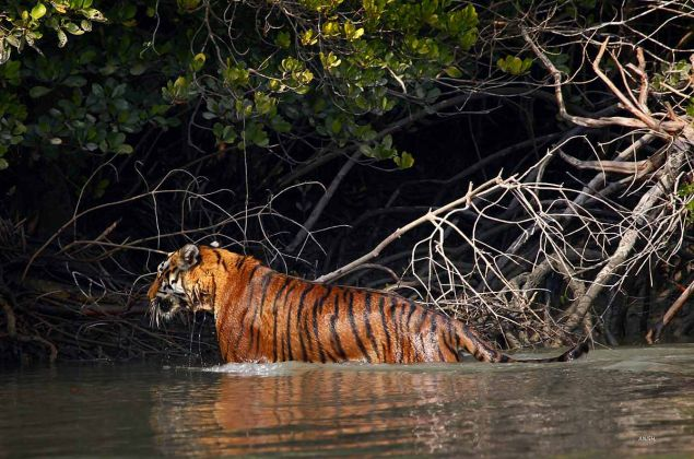Sundarban Tour Package - 3 Days 2 Night